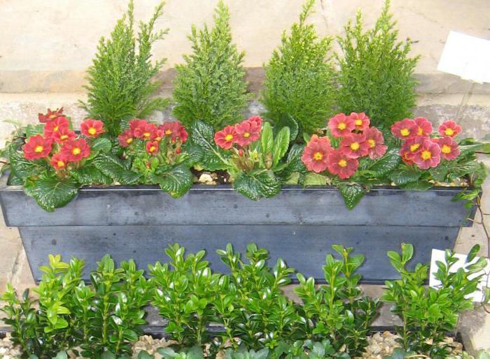 ящики для цветов своими руками из дерева