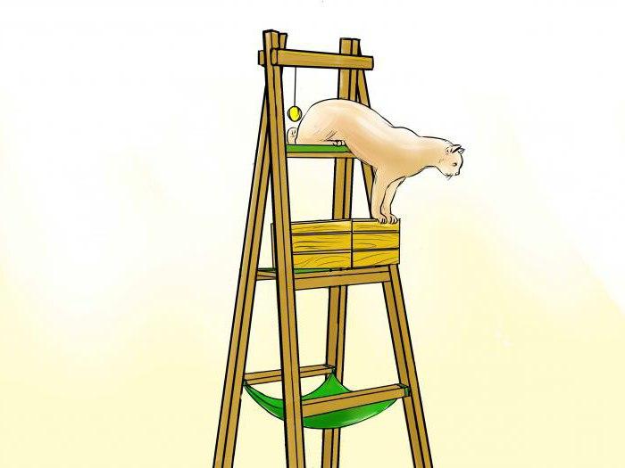 Стремянка козел своими руками фото 837