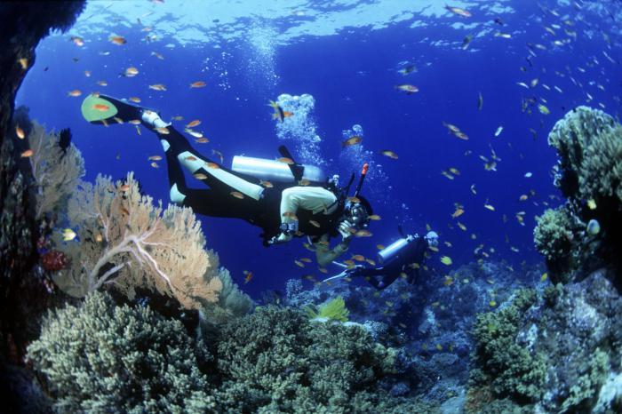 лучшие маски для подводного плавания