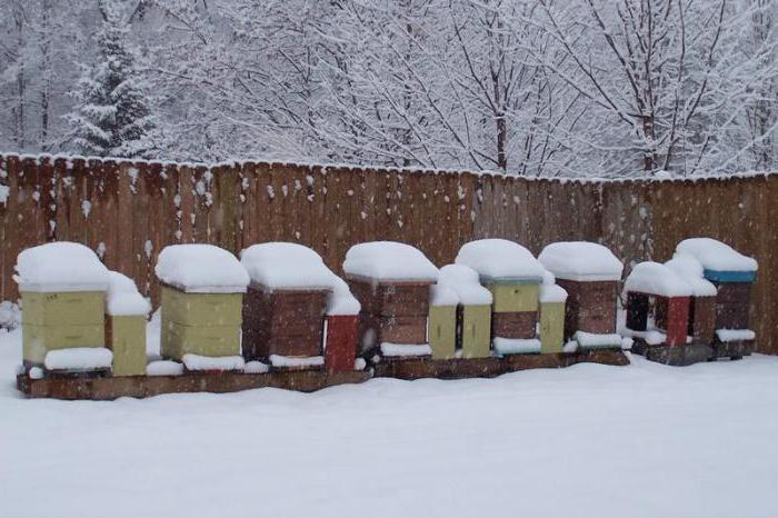 зимовка пчел на улице в сибири