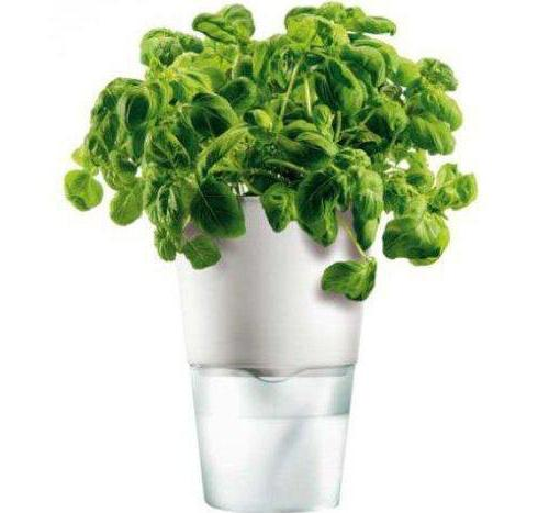 гидропонные установки для выращивания зелени