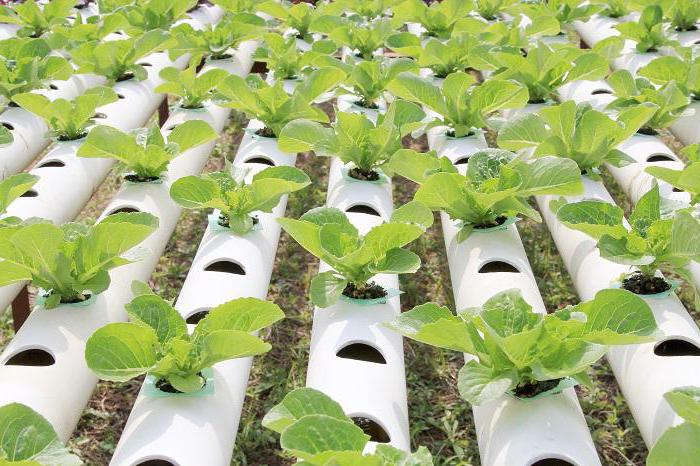 гидропонная установка для выращивания зелени в теплице