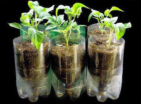 гидропонная установка для выращивания зелени и лука