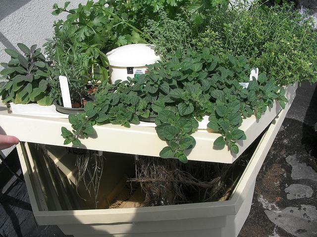 гидропонная установка для выращивания зелени бизнес