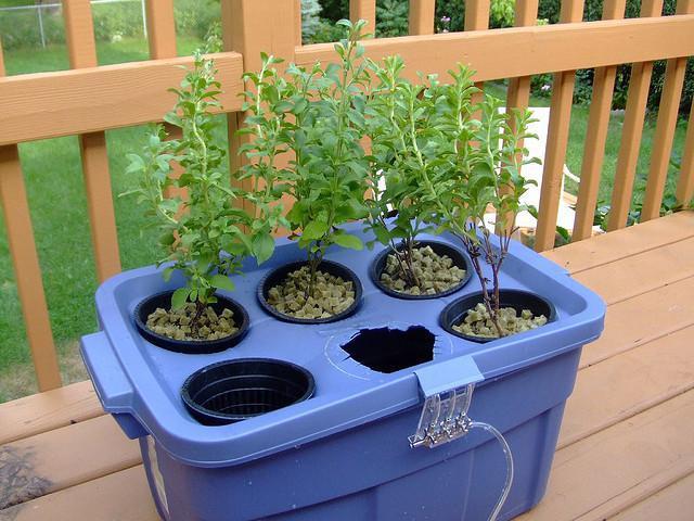 гидропонная установка для выращивания зелени своими руками