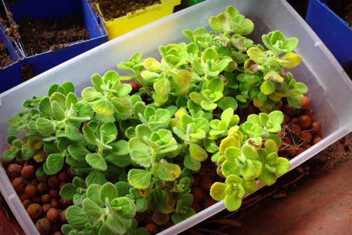 гидропонная установка для выращивания зелени в домашних условиях