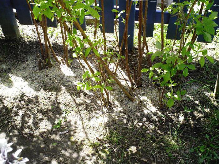 Садовые удобрения для цветов: азот, калий, фосфор Flowery