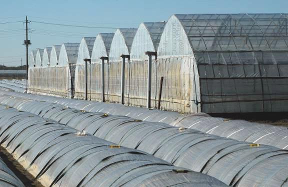 фермерская теплица из поликарбоната