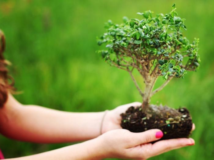как сформировать штамбовое дерево