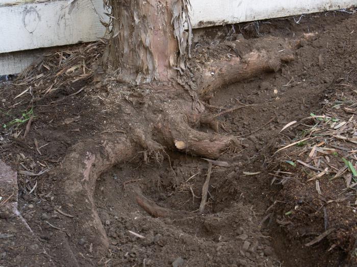 чем можно полить дерево чтобы оно засохло