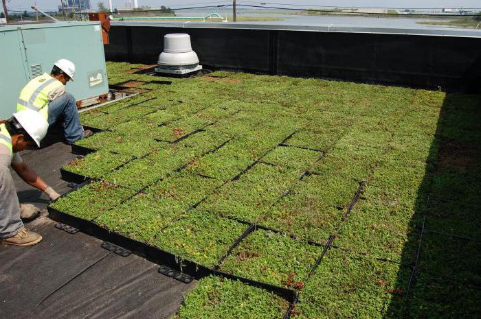зеленый цвет крыши