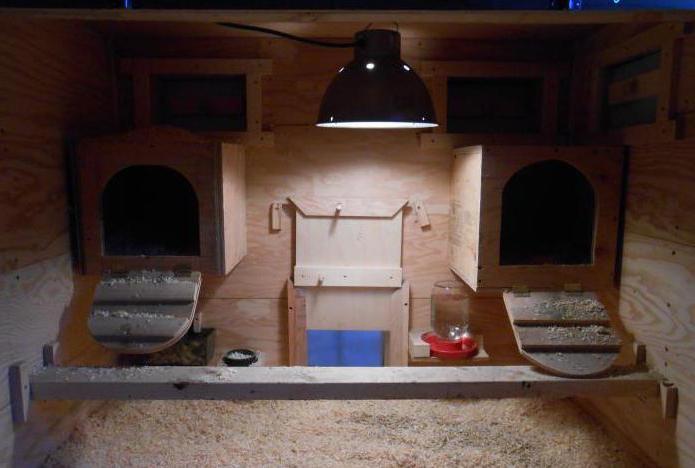 Как обогревать зимой курятник? Инфракрасные лампы для курятника. Температура в курятнике зимой