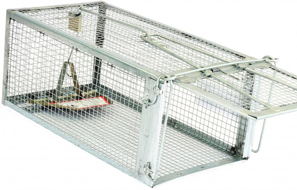 DIY do-it-yourself rat traps from plastic bottles