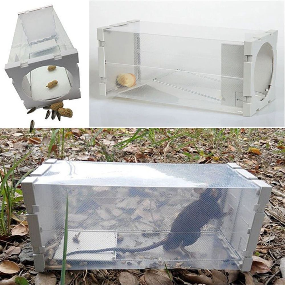 how to make a rat trap at home