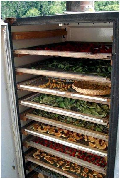 Сушилка для грибов из старого холодильника