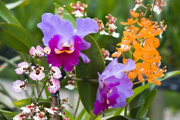 цветы в вакууме отзывы