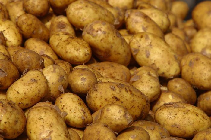 сорт картофеля скарб фото и описание