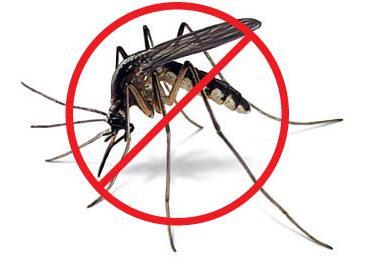 Как спасаться от комаров в домашних условиях