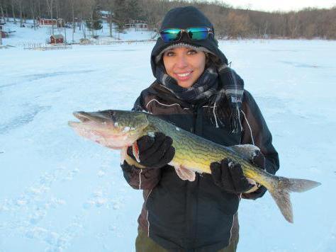 самодельная подводная видеокамера для зимней рыбалки своими руками