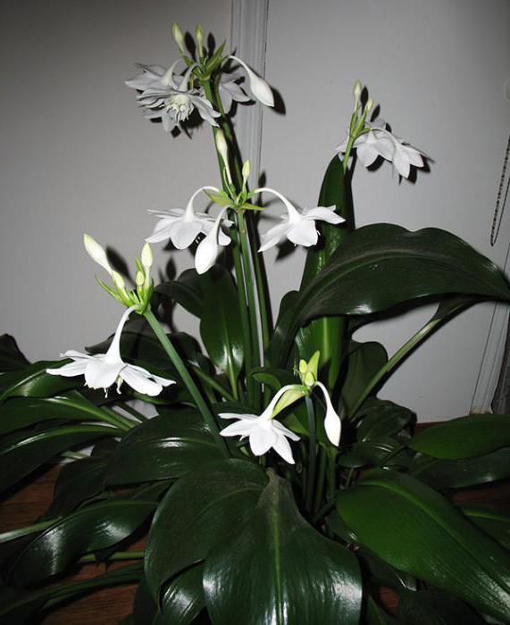 Комнатные цветы фото