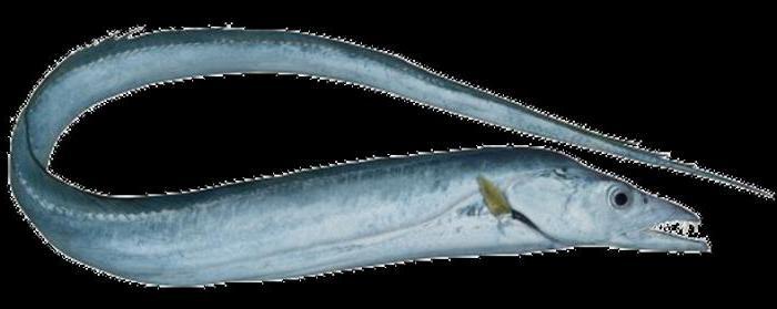 Сабля рыба рецепты с фото 4