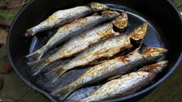 Домашняя засолка рыбы в рассоле - как правильно солить рыбу в 37