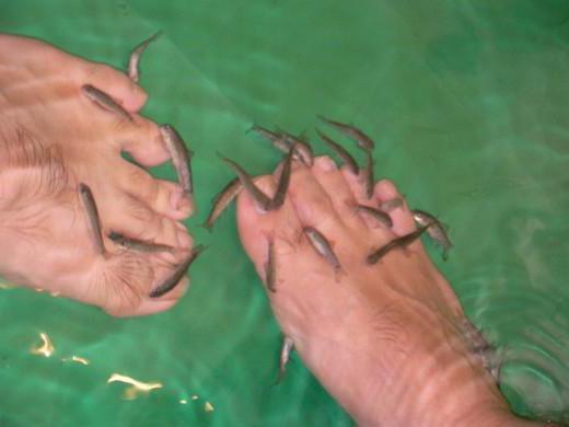 пилинг ног рыбками