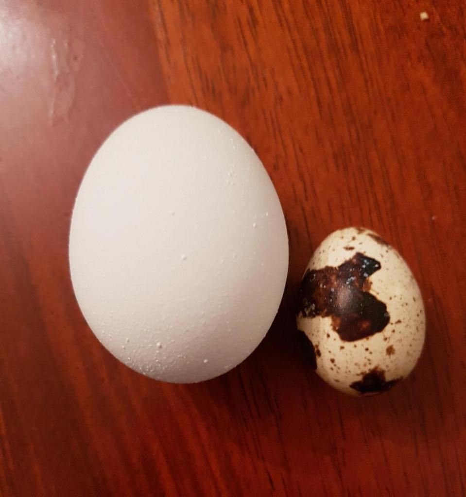 Сравнение куриного и перепелиного яйца