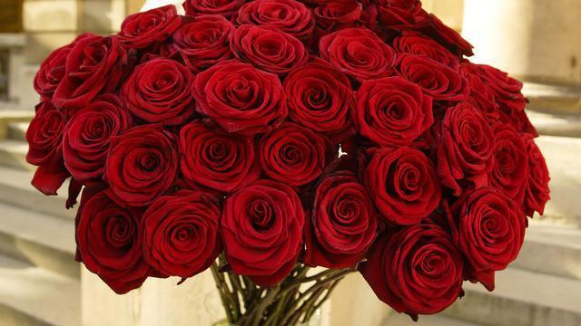 Сонник: красные розы