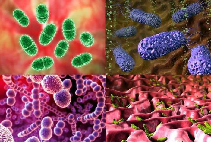 Антибиотики действующие на грамположительные и грамотрицательные бактерии