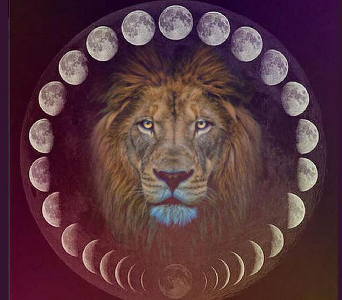 покемона, картинки лунных львы последовательность страниц пунктов