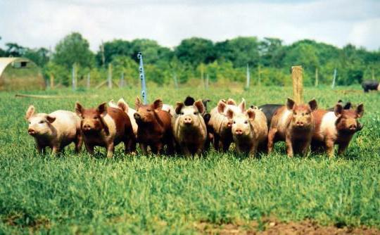 фермерское мясо отзывы