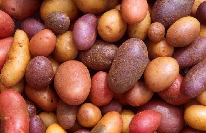 Является ли корнем клубень картофеля