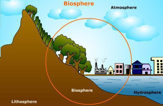 in the biosphere matter follows circular pathways while energy flows in a linear fashion In the biosphere, matter follows circular pathways, while energy flows in a linear fashion explain.