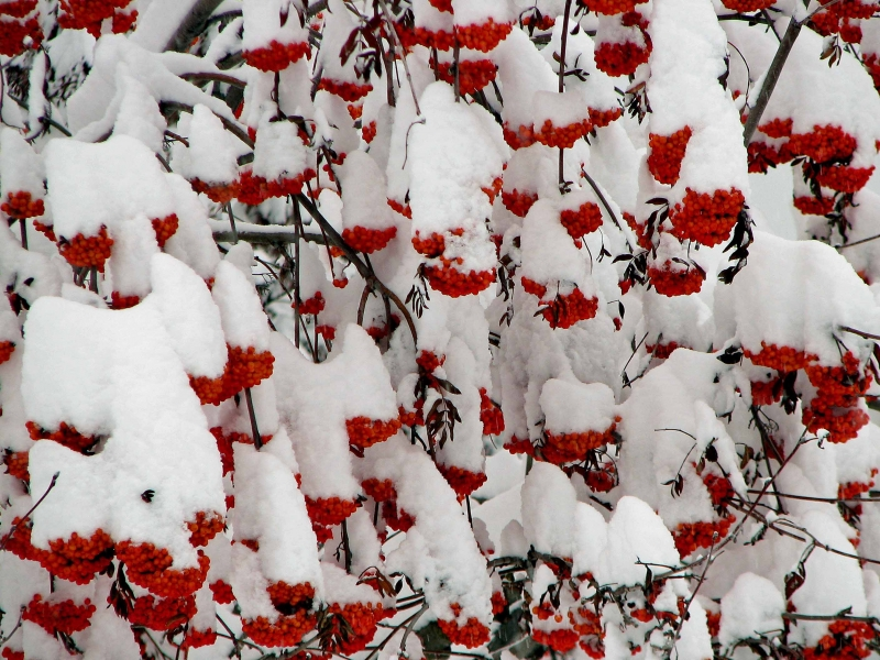 how to decorate the garden in winter