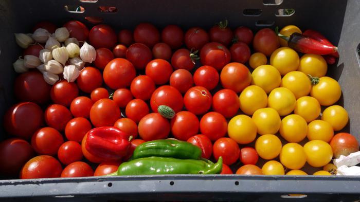 виды томатных овощей