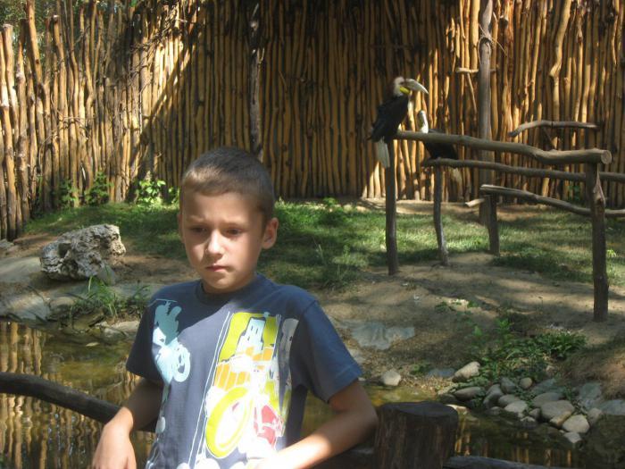 сафари парк в Краснодаре цена