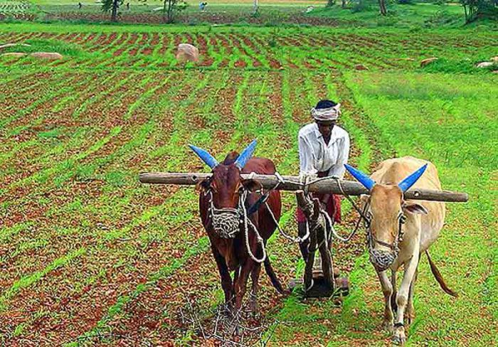 В стихах поздравления работников сельского хозяйства и перерабатывающей промышленности