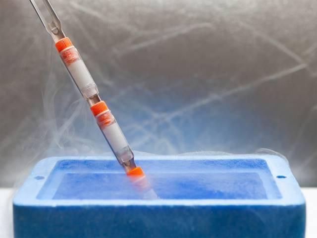 Что означает результат анализов папилломавирус