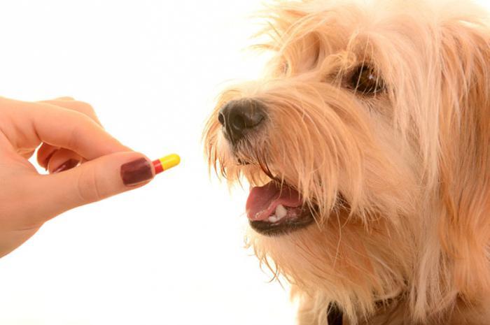 какие антибиотики можно собакам