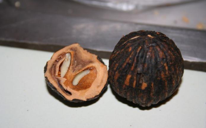 лист черного ореха от паразитов