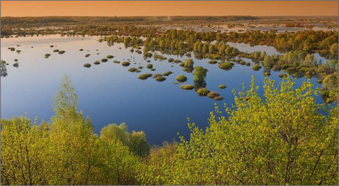 река десна рыбалка