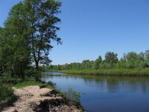 десна река фото