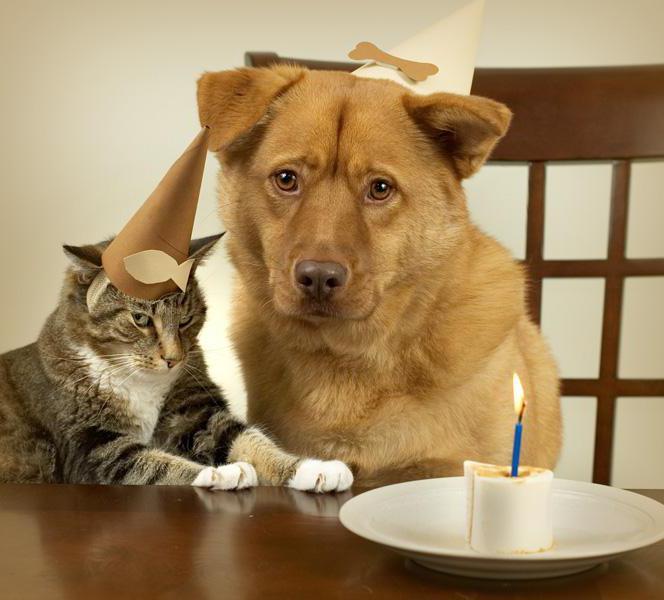 Книга психология кошек и собак