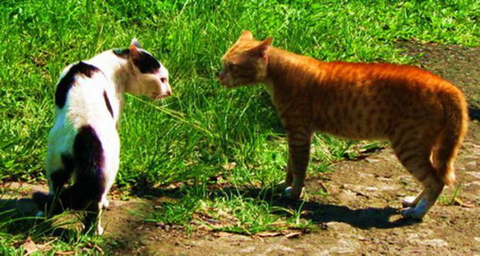Психология кошек и котов