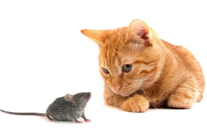 Любовь к кошкам психология