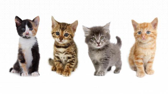Психология поведения кошек