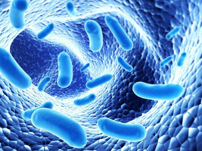 Как восстановиться после лечения антибиотиками