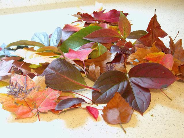 Цветочки из листьев деревьев своими руками: мастер-класс с фото…