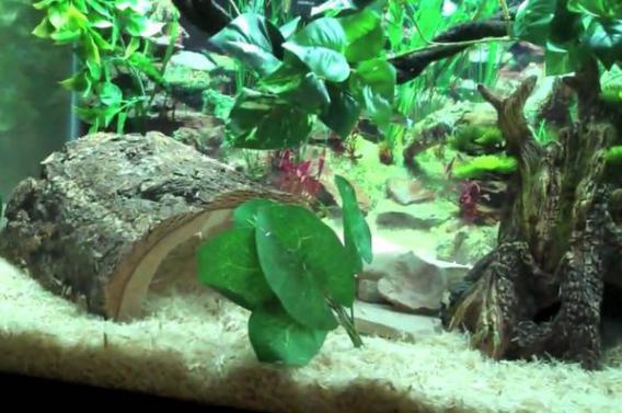 домашние змеи
